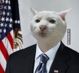 serious-cat-in-suit